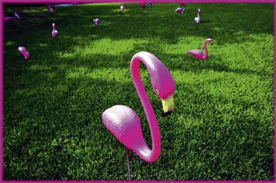 Розовый фламинго символ сексменьшинств