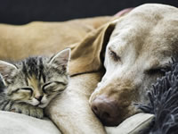 Изменяется ли метаболизм витамина D у больных раком собак?