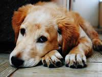 Дефицит витамина D и опасные болезни: ваша собака в зоне риска?